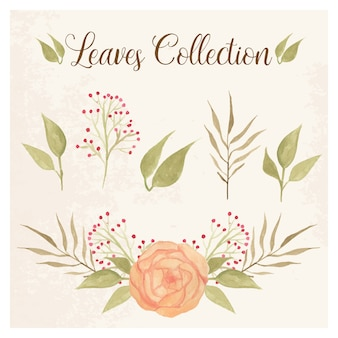 Leaves collection with peony and berries
