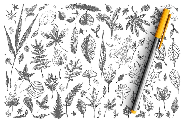 Leaves doodle set. collection of different shape decorative autumn spring falling tree birch oak