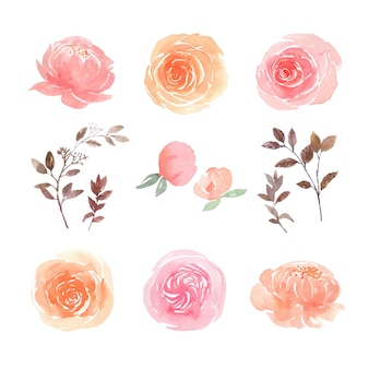 Leaves and floral watercolor elements set hand painted lush flowers, illustration of  flower.