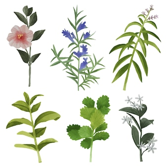 Leaves and flowers pack
