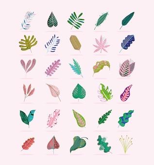 Листья листва филиал природа ботанические украшения иконки набор иллюстраций