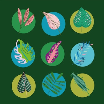 Leaves foliage decoration round style icons set illustration