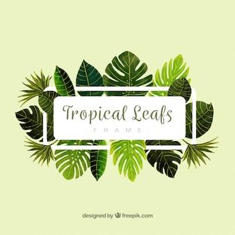 Foglie cornice con piante tropicali