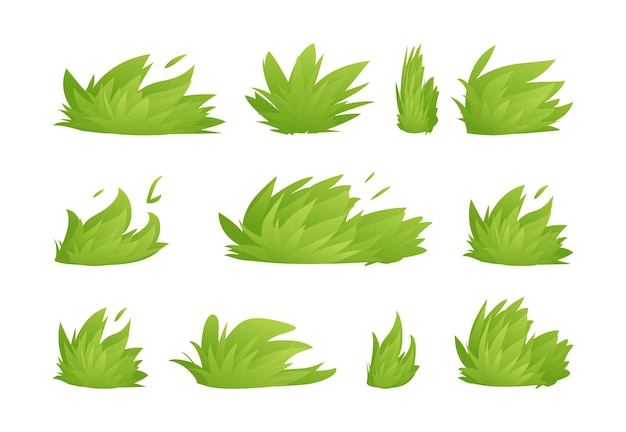Leaves of green grass