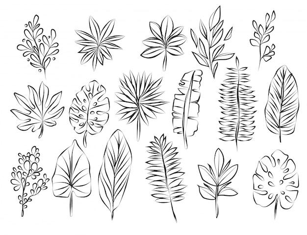 手描きの葉と黒と白をスケッチ