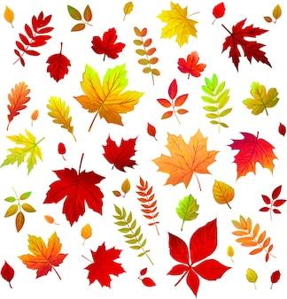 Листья на прозрачном фоне листья с разных деревьев