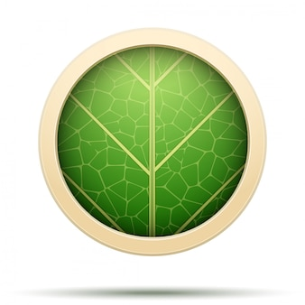 Leaves round icon
