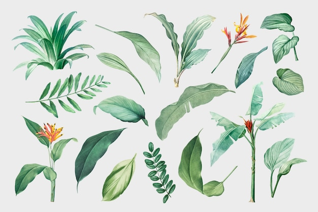 Tropical Leaves Images Free Vectors Stock Photos Psd +341.000 vectores, fotos de stock y archivos psd. tropical leaves images free vectors
