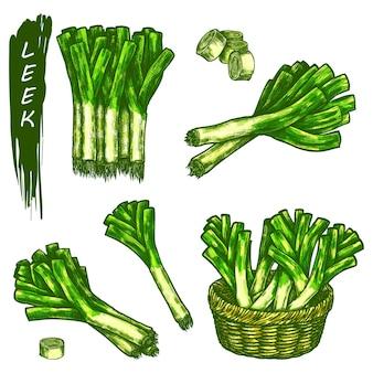 Элементы эскиза лука-порея, пучок свежих овощей. рисованной иконки органических естественных растений.