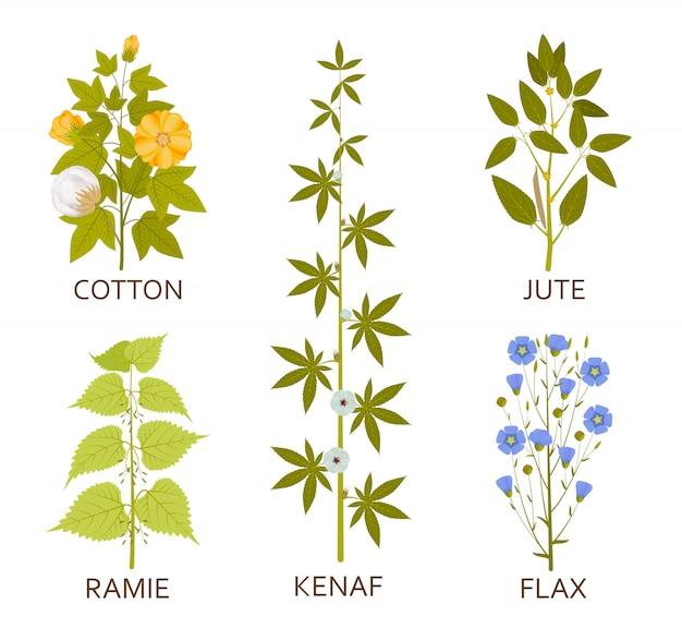 잎, 꼬투리 및 꽃을 가진 콩과 식물. 삽화.