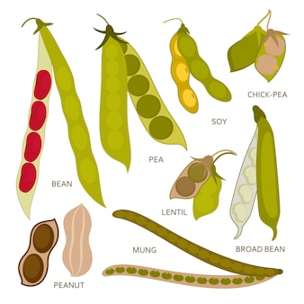 Legumes pods set in flat style. illustration. Premium Vector