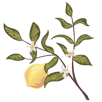 レモンと花の枝。明るい黄色の果実。手描きイラスト。