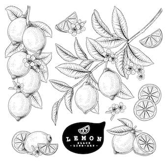 Лимон цитрусовые фрукты рисованной элементы.