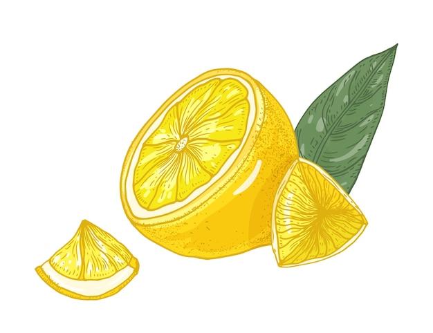 Лимон нарезанный на кусочки и листья иллюстрации