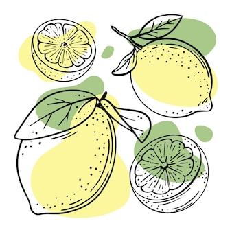 スケッチスタイルであなたの店やレストランのための葉とレモンのおいしい柑橘系の果物