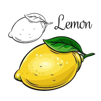 Лимонный рисунок значок рисованной цитрусовые
