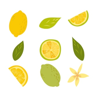 Lemon fruits set isolated on white. whole and halved lemon citrus fruit with juicy flesh and green leaves vector set. organic vegetarian fresh food. vitamin tropical juicy citrus.