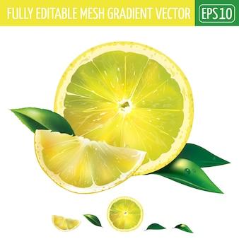 Lemon illustration on white