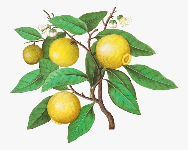 Лимон в винтажном стиле