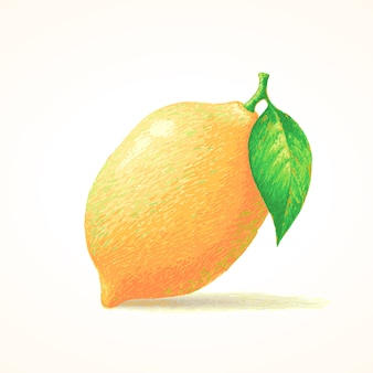 Lemon, sketch hand drawn