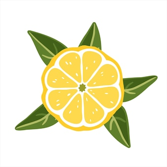 Lemon slice with leaves on a white background. vector illustration