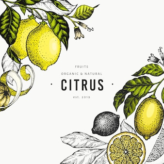 Lemon tree banner template. hand drawn fruit illustration.