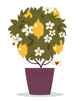 Lemon tree in a ceramic pot tree with flowers and fruits