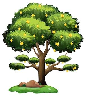 白い背景で隔離の漫画スタイルのレモンの木