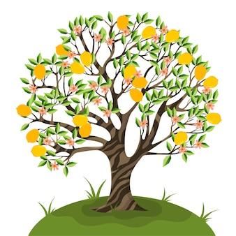 Лимонное дерево изолировать на белом фоне