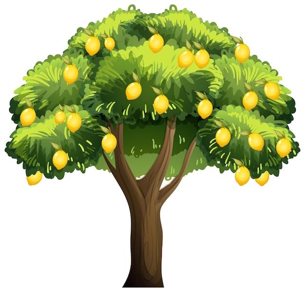 레몬 나무 흰색 배경에 고립