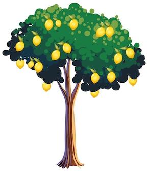 白い背景で隔離のレモンの木