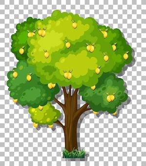 透明な背景の上のレモンの木