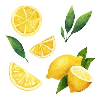 레몬. 신선한 레몬의 수채화 세트입니다.
