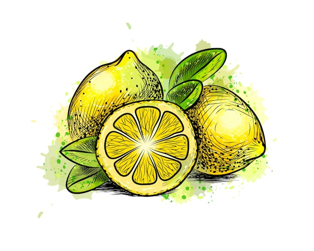 Лимон с листьями из всплеск акварели, рисованный эскиз. иллюстрация красок