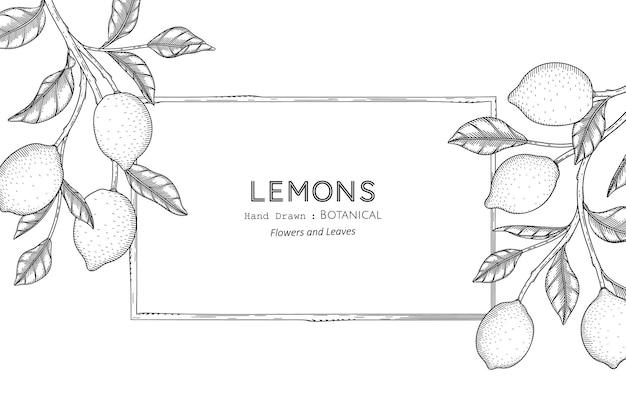 Лимоны фрукты рисованной ботанические иллюстрации с линией искусства.
