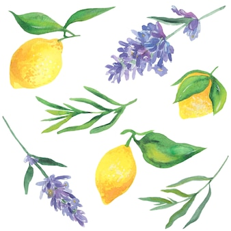 Lemons and lavender., watercolor illustration. vector isolated elements.