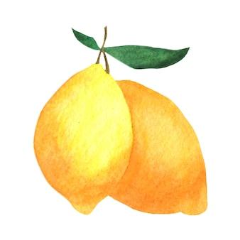 잎 가지에 레몬입니다. 흰색 바탕에 수채화 구성입니다.