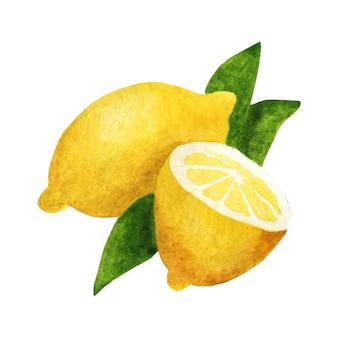 葉のある枝のレモン。白い背景の水彩画の構成。