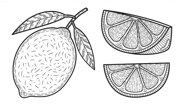 Lemons. set of black and white citrus fruits. whole lemon, slice, cut pieces, plant leaves.