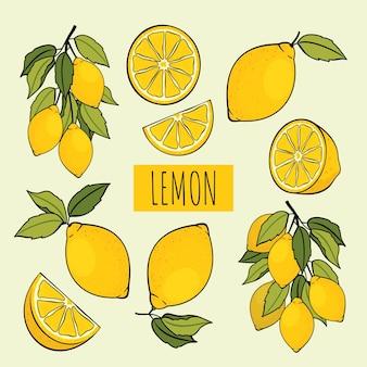 イラストのレモンセット:葉、半分、スライス、枝を持つレモン。