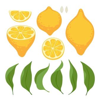 Lemons set. whole fruit with leaves, slice and half.