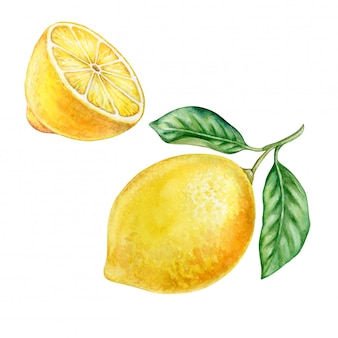 Lemons. watercolor