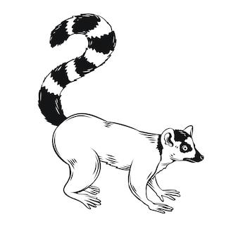 Лемур значок. значок наброски животных мадагаскара. для зоопарка