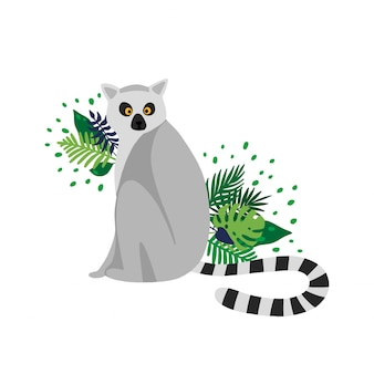 Lemur isolated in white background