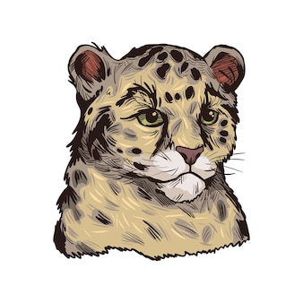 Leopard babby, portrait of exotic animal isolated sketch. hand drawn illustration.