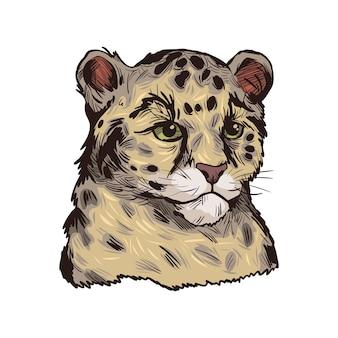 ヒョウの赤ちゃん、エキゾチックな動物のスケッチの肖像画。手描きイラスト。