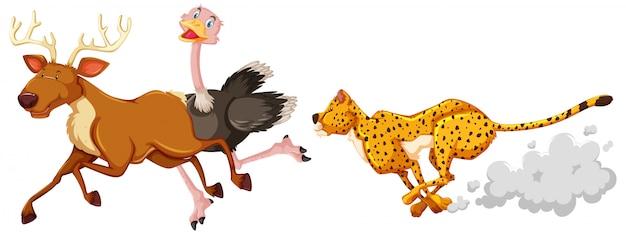 ヒョウ狩りのダチョウと白い背景の上の漫画のキャラクターの鹿