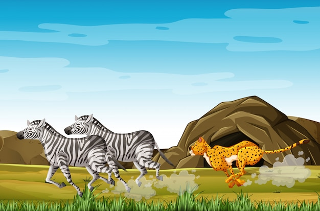 Leopard hunting zebras in cartoon character on the forest background