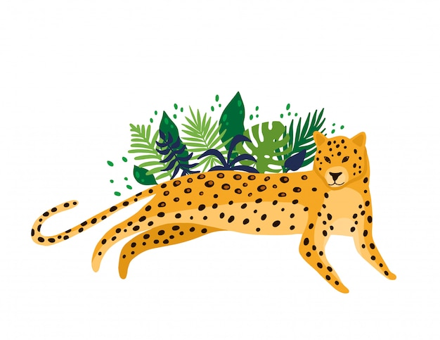 Leopard isolated in white background
