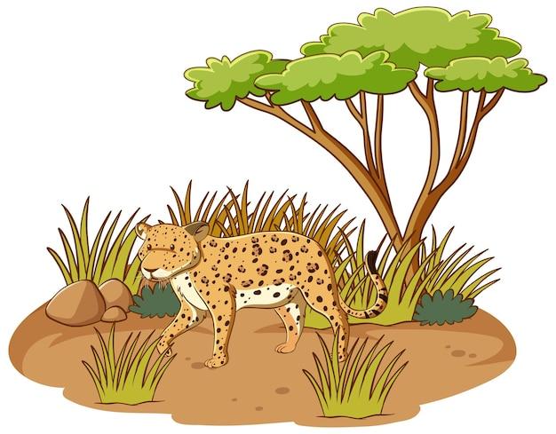 Leopardo nella foresta di savana su sfondo bianco